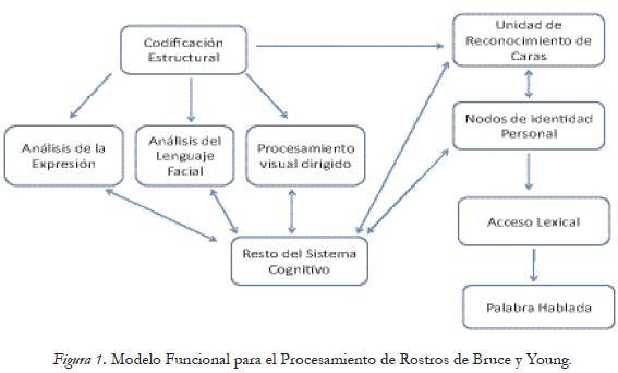Proceso cognitivo de reconocimiento facial